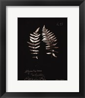 Framed Fern Plate No. 22