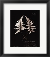 Framed Fern Plate No. 714