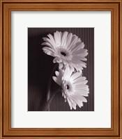 Framed Fresh Cut Gerbera Daisy I