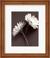 Framed Fresh Cut Gerbera Daisy IV