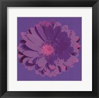 Framed Flower III