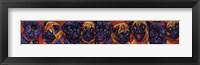 Framed Pug Mugs