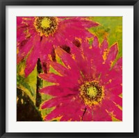 Framed Gerbera Maximus One