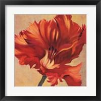 Framed Tulipan Three