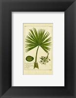 Palm Leaves II Framed Print