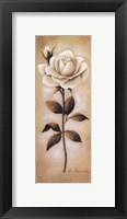 Framed White Roses I