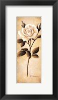 Framed White Roses II