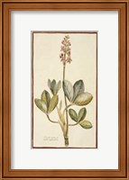 Framed Botanicals