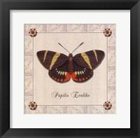Framed Papilio Evalthe II