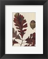 Framed Over-Cup White Oak