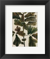 Framed Black-Jack Oak