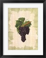 Framed Antique Grapes - Aspiran