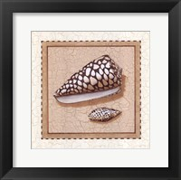 Seashells I Framed Print