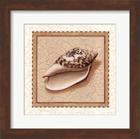 Framed Seashells II