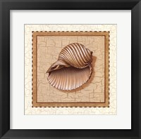 Framed Seashells III