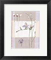 Framed Impression Florale II