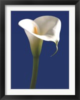 Framed Calla on Blue I