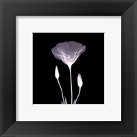Framed Poppy in Lace