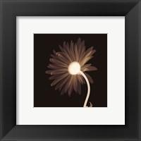 Framed Sunburst Petals (Sepia)