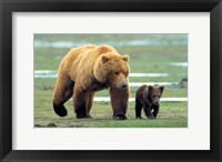 Framed Grizzly Man - couple of bears