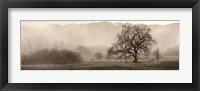 Framed Meadow Oak Tree