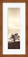 Framed Sentinel Oak Tree