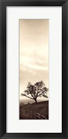 Sentinel Oak Tree Framed Print