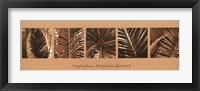 Framed Botanical Collection II