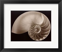 Ocean Keepsake II Framed Print