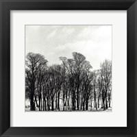 Arbres D'Hivers III Framed Print