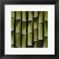 Framed Bamboo Lengths