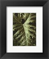 Tropica I Framed Print