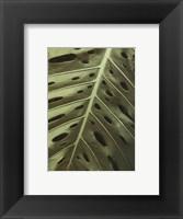 Tropica II Framed Print