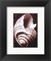 Sea Gallery IV Framed Print