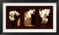 Exotic Blooms Framed Print
