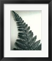 Framed Fern Leaf I