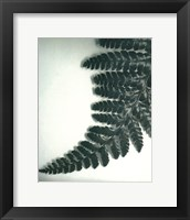 Framed Fern Leaf II