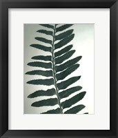 Framed Fern Detail I