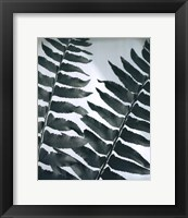 Framed Fern Detail II