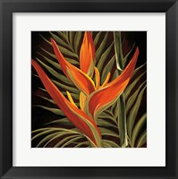 Framed Birds of Paradise I