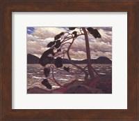 Framed West Wind