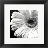 Framed Sunburst I
