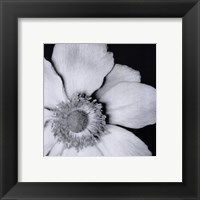 Sunburst IV Framed Print