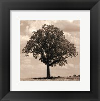 Framed Branching Out
