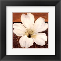 Framed Azalea Blossom