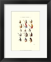 Framed Trout Flies I