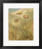 Framed Alpine Florals III