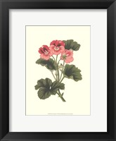 Framed Pink Geranium I