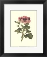 Framed Pink Geranium II