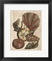 Framed Crackled Shell and Coral Collection on Cream II